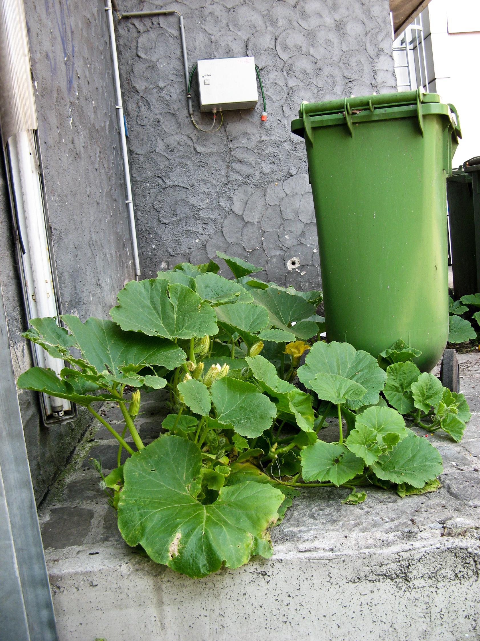 Kürbis neben Mülltonne