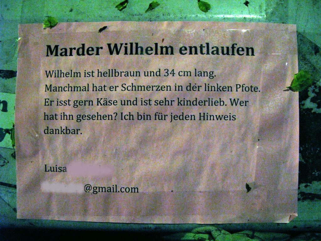 Marder Wilhelm entlaufen